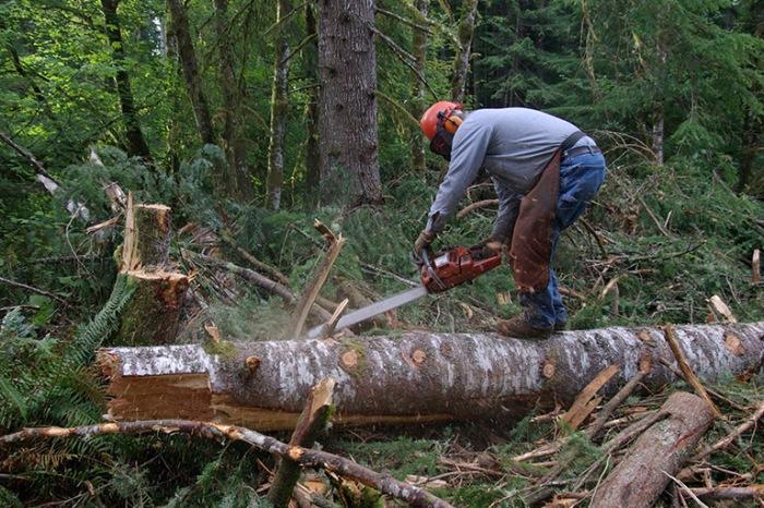 chainsaw-logger
